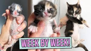 Learn How Baby <b>Kittens</b> Grow: 0-8 Weeks! - YouTube