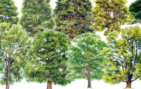 A simple guide to identifying British <b>trees</b> - Country <b>Life</b>