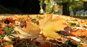 Výsledek obrázku pro podzimní slunce
