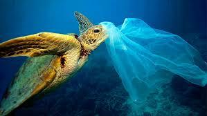 Resultado de imagen para pez plastico
