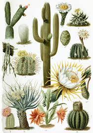 <b>Cactus</b> - Wikipedia