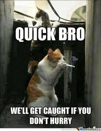 Cat Starts Smoking Memes. Best Collection of Funny Cat Starts ... via Relatably.com