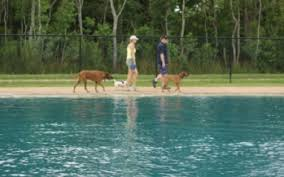 Image result for dog swimming in park