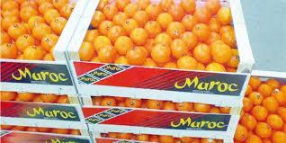 """Résultat de recherche d'images pour """"Les exportations d'agrumes Maroc"""""""