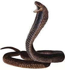 Resultado de imagen de cobra