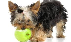 Πώς σχηματίζεται ο καταρράκτης στον σκύλο;