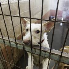 It's Now or Never: Stop Dog Trafficking Now! | National Animal …