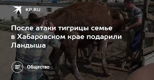 После атаки тигрицы семье в Хабаровском крае подарили ...