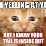 Excited Kitten Meme Generator - Imgflip via Relatably.com
