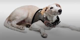 Комбинезон «Тузик» и другая зимняя одежда для <b>собак</b>