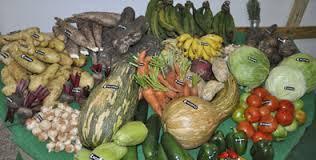 Crecen ventas agrícolas al turismo en Varadero