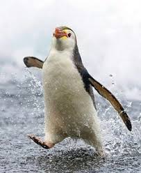 Pin tactic Antarctic: лучшие изображения (488) в 2019 г ...