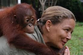 Lone Droscher Nielsen, the Borneo Orangutan Survival Foundation Centre's director, with an orangutan on. Enlarge this image - LoneDroscherNielsen_t700
