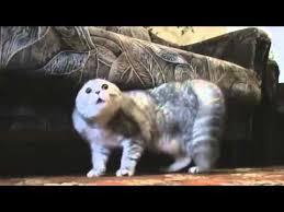 <b>Heavy Metal Cats</b> - YouTube