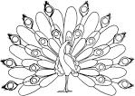 Раскраски распечатать про птиц
