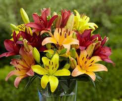 <b>Bloom</b> Times <b>for Lilies</b>