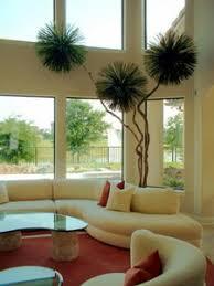 indoor plant brisbane brisbane office plants