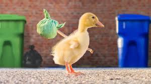 The Runaway <b>Duck</b> - YouTube