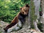 Animaux foret