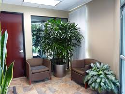 office plant care interior design and indoor recent works home decor liquidators cheap home cheap office plants