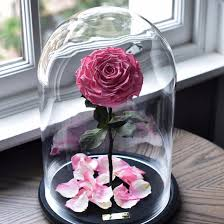 beauty and the beast enchanted roses from forever rose home