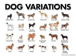 Dog breeding is not macro evolution