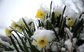 Image result for winter spring wallpaper