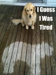 I guess I was tired | Funny Dirty Adult Jokes, Memes & Pictures via Relatably.com