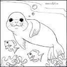 Картинка раскраски тюлень