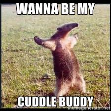 wanna be my cuddle buddy - oso hormiguero thug | Meme Generator via Relatably.com