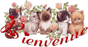 Bonjour, Bonjour !! Images?q=tbn:ANd9GcQNqiKYTnOXC4CFvW50a0bFQ3fb0HsnM510gXN5Fb1-dV3qA55b