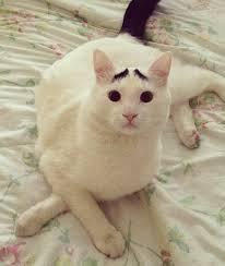 Eyebrow Cat   Know Your Meme via Relatably.com