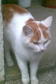Bildergebnis für gefleckte katzen