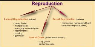 Reproduction,class10,scc education,Sharma sir ,sexual ,asexual reproduction,