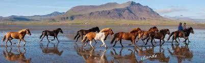 """Résultat de recherche d'images pour """"image des chevaux"""""""