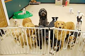 Is Doggie Daycare Right for my Pup?