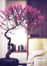 bonsai in interior settings bonsai tree interior