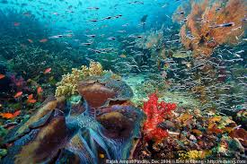 Image result for raja ampat
