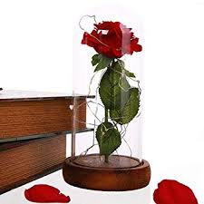 AHOMATE New Beauty and The Beast Rose ... - Amazon.com