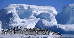 Resultado de imagen para Los pinguinos