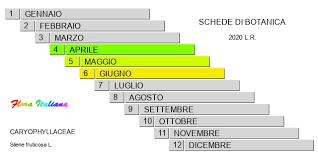 Silene fruticosa [Silene fruticosa] - Flora Italiana