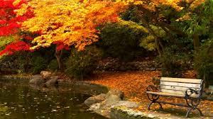 lithia park fallen leaves ashland bench furniture pond colored autumn furniture