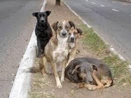 Resultado de imagen para jauria de perros