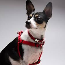 Ποιοι σκύλοι εμφανίζουν Διαβήτη;