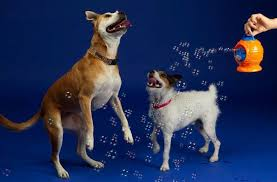 Image result for dog bubble machine
