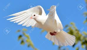 Resultado de imagen de Paloma volando