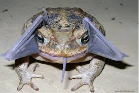 Image result for toad pictures