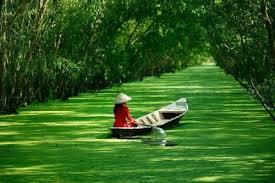 Image result for sông vàm cỏ