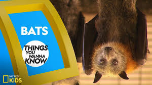 Cool Facts About <b>Bats</b> | Things You Wanna Know - YouTube