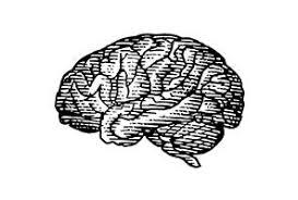 <b>Beautiful Minds</b> - Scientific American Blog Network
